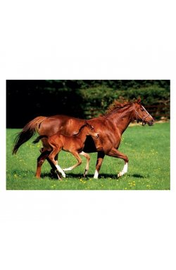 "Постер ""Mare & Foal"" 61 x 91,5 см - wws-7138"