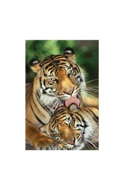 "Постер ""Mother's Love (Tigers)"" 61 x 91,5 см - wws-7836"